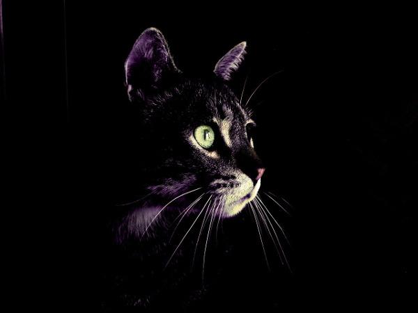 cat-2575913_650