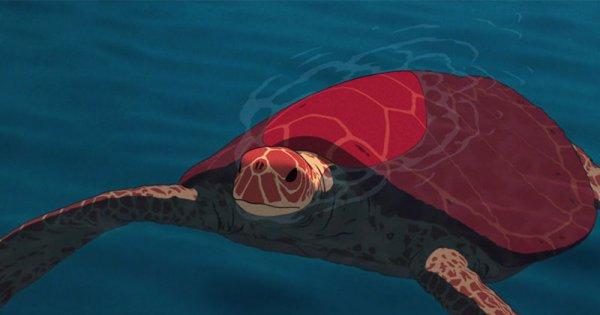 la-tortue-rouge-tourtle.jpg